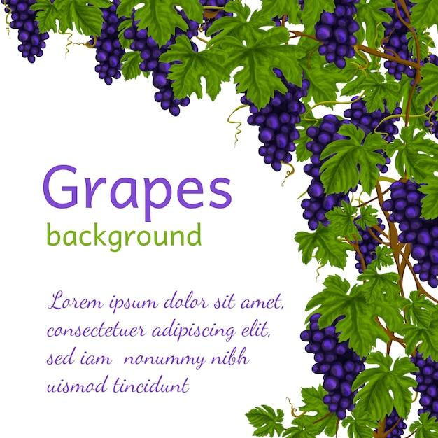 Modello di sfondo dell'uva Vettore Premium
