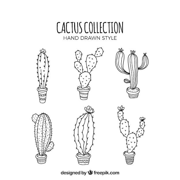 Moderno insieme di cactus abbozzato Vettore gratuito