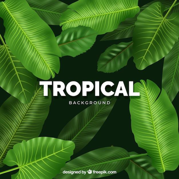 Moderno sfondo tropicale con un design realistico Vettore gratuito