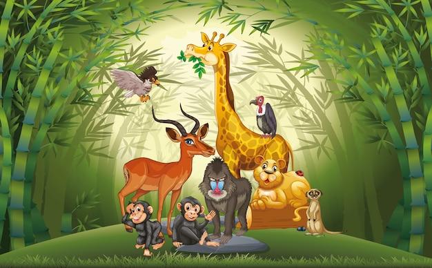 Molti animali nella foresta di bambù Vettore gratuito