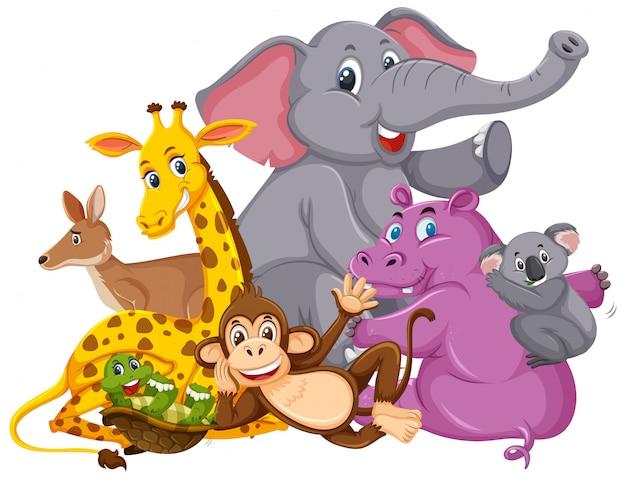 Molti animali selvatici sorridono Vettore Premium