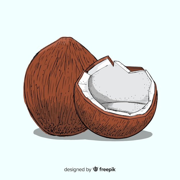 Noci di cocco Vettore gratuito