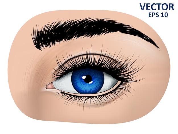 Occhi azzurri, sopracciglia e ciglia lunghe Vettore Premium