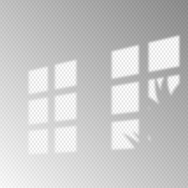 Ombre minimaliste trasparenti sovrappongono l'effetto con la pianta Vettore gratuito