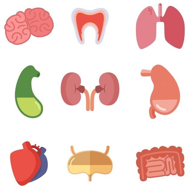 Organi interni umani su sfondo bianco. le icone di vettore hanno impostato nello stile del fumetto Vettore Premium