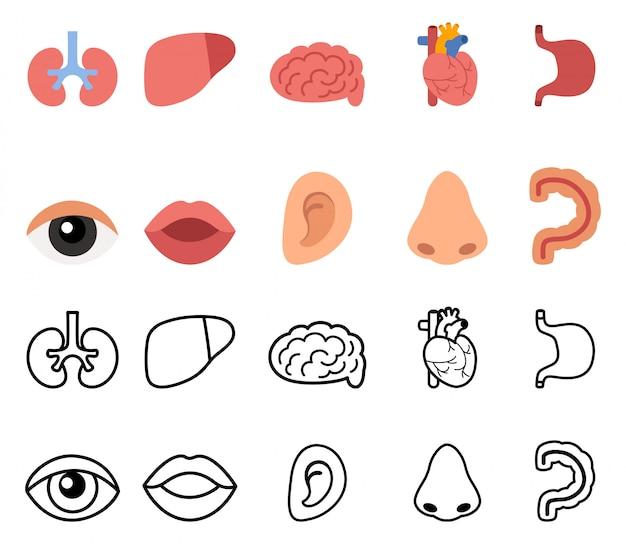 Organi umani disegnati a mano Vettore Premium