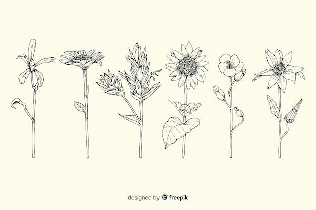 Pacchetto di fiori di botanica vintage disegnato a mano realistico Vettore gratuito