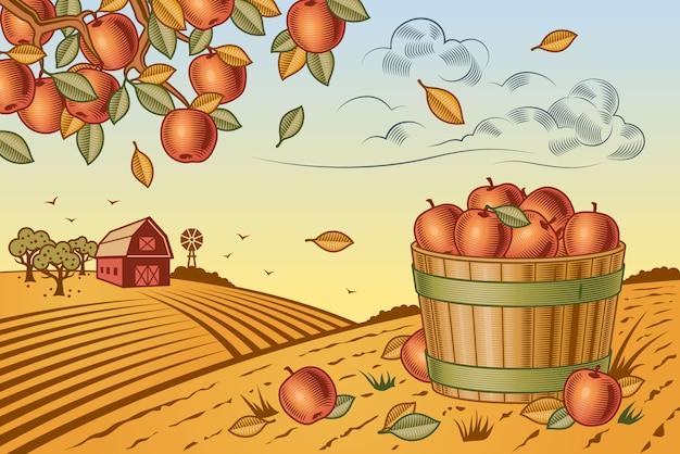 Paesaggio della raccolta delle mele Vettore Premium