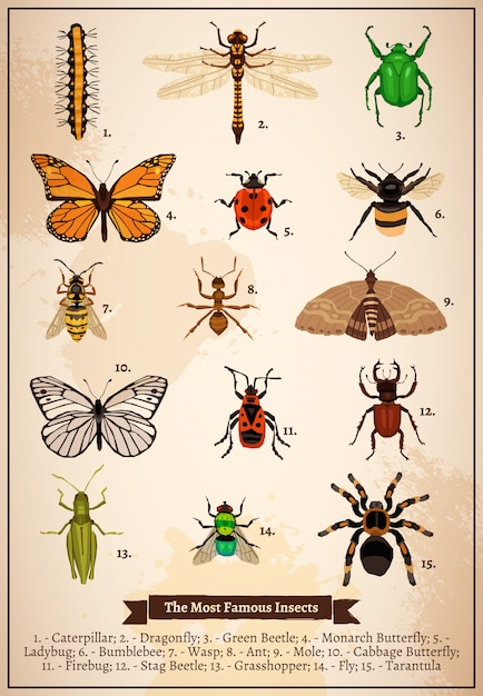 Pagina del libro dell'annata degli insetti Vettore gratuito