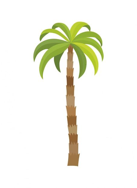 Palma dell'illustrazione di vettore isolata. albero di cocco. palma. turismo, simbolo di viaggio, segno Vettore Premium