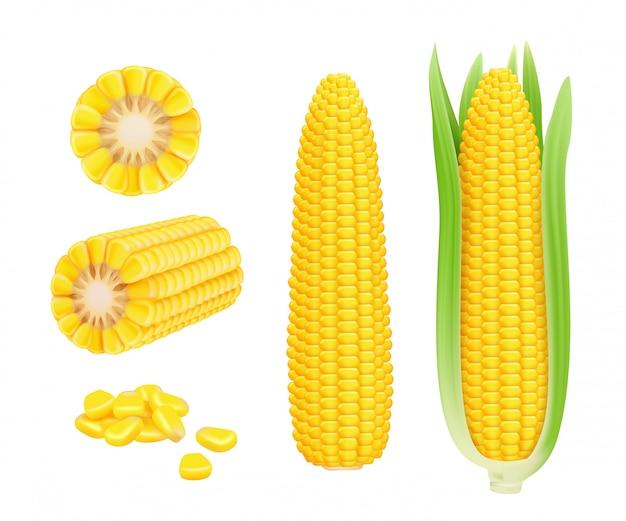 Pannocchia di mais realistica. modello di vettore di mais dolce in scatola raccolta verdure fresche di mais Vettore Premium