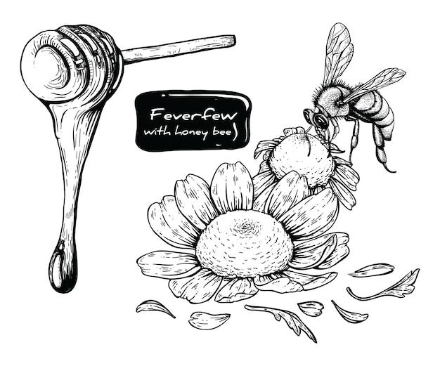 Partenio e miele ape con la line-art Vettore Premium