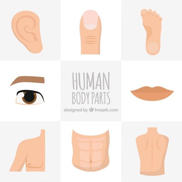 Parti del corpo umano disegnati a mano Vettore gratuito