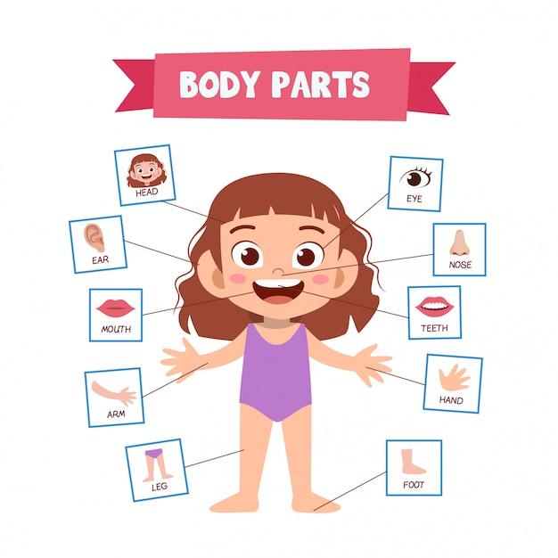 Parti del corpo umano Vettore Premium