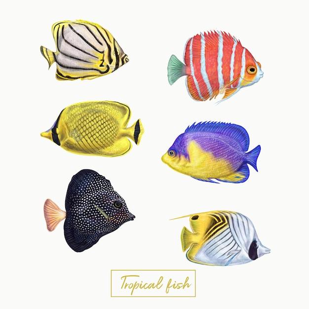 Pesci tropicali colorati Vettore Premium