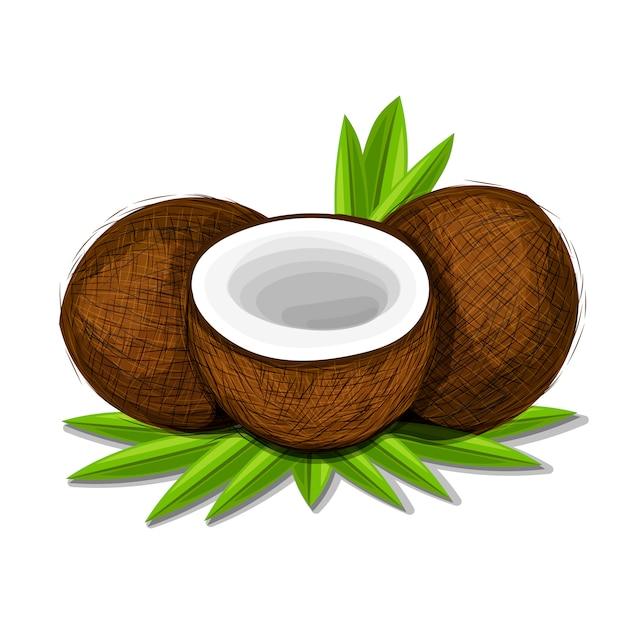 Pezzi di cocco con foglie isolato su sfondo bianco. Vettore Premium