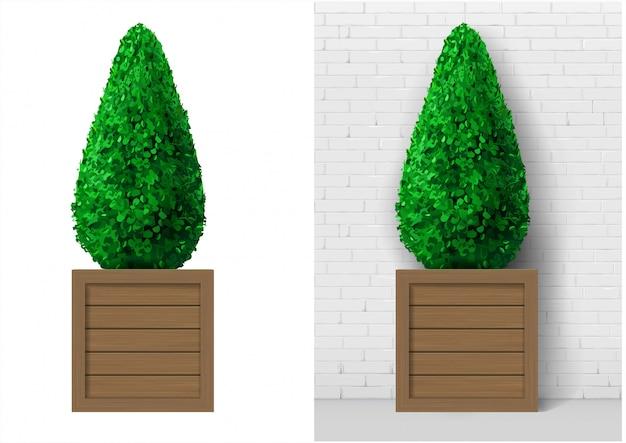 Pianta di bush in vaso di legno moderno Vettore Premium