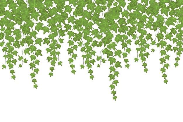 Pianta rampicante della parete verde dell'edera che pende da sopra. decorazione del giardino Vettore Premium