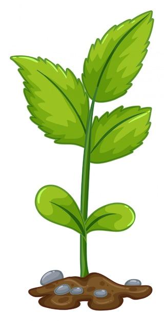 Pianta verde che cresce dal sottosuolo Vettore gratuito