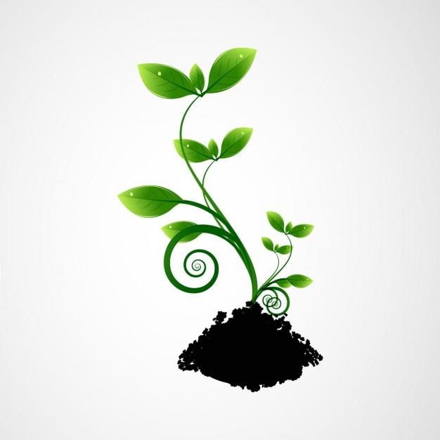 Pianta verde Vettore gratuito