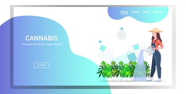 Piantagione di canapa industriale irrigazione cannabis donna contadina Vettore Premium
