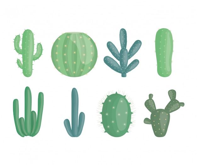 Piante esotiche di cactus in vasi di ceramica Vettore gratuito