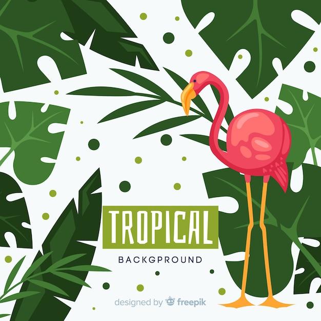 Piante tropicali disegnate a mano e priorità bassa dell'uccello Vettore gratuito