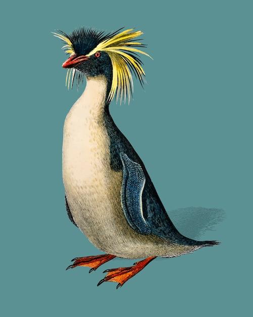 Pinguino di rockhopper (eudyptes chrysocome) illustrato da charles dessalines d'orbigny (1806-1876). Vettore gratuito