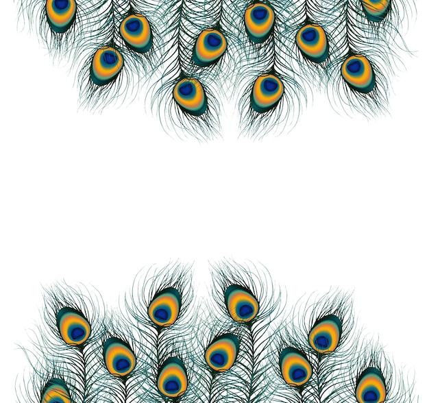 Piuma di pavone su sfondo isolato Vettore Premium