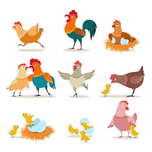 Pollo cartoon pulcino con uova, gallina e gallo. pollo di buon natale, uccelli domestici e personaggi di animali domestici di san valentino Vettore Premium