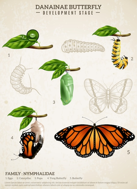 Poster retrò farfalla danainae Vettore gratuito