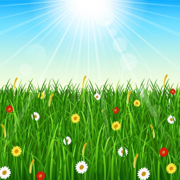 Priorità bassa della natura con erba verde, cielo blu e sole splendente Vettore Premium