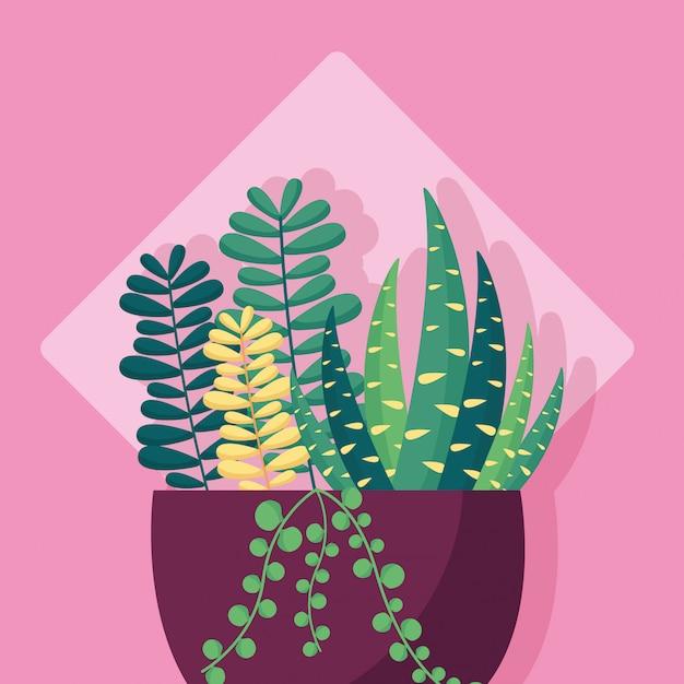 Progettazione di immagini piatte di piante decorative for Piante decorative