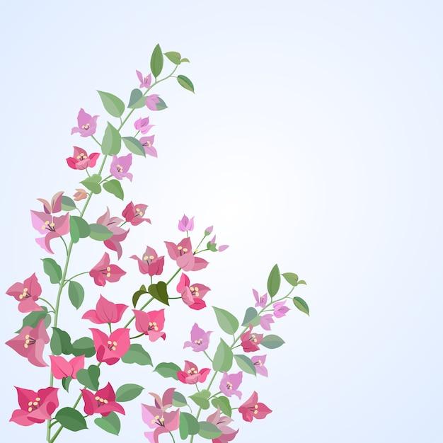 Progettazione di vettore dei fiori delle buganvillea Vettore Premium