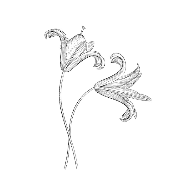 Progettazione di vettore dell'illustrazione del giglio Vettore Premium