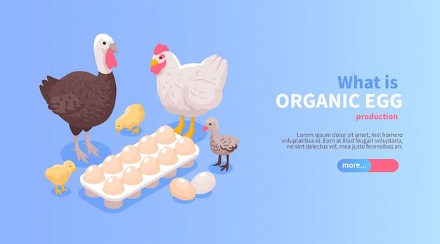 Progettazione orizzontale isometrica dell'insegna del sito web di produzione agricola del pollame con l'offerta della carne di tacchino del pollo delle uova organiche Vettore gratuito