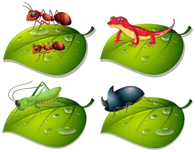 Quattro tipi di insetti su foglie verdi Vettore gratuito