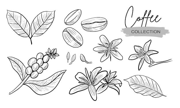 Raccolta del disegno della pianta e del fiore del caffè realistica Vettore Premium
