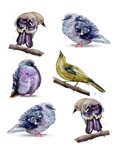 Raccolta dell'acquerello di uccelli carino Vettore Premium
