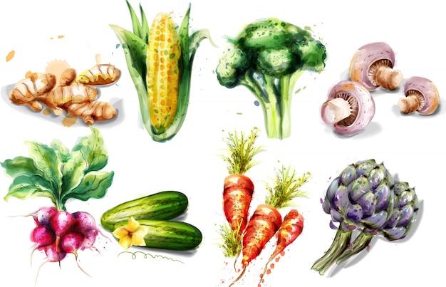 Raccolta dell'acquerello di verdure Vettore Premium