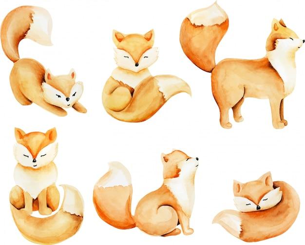 Raccolta di acquerello carino volpi illustrazione Vettore Premium