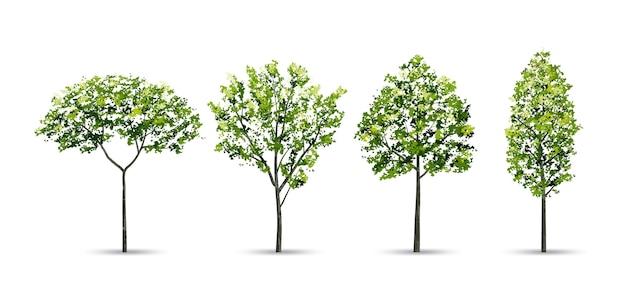 Raccolta di alberi Vettore Premium