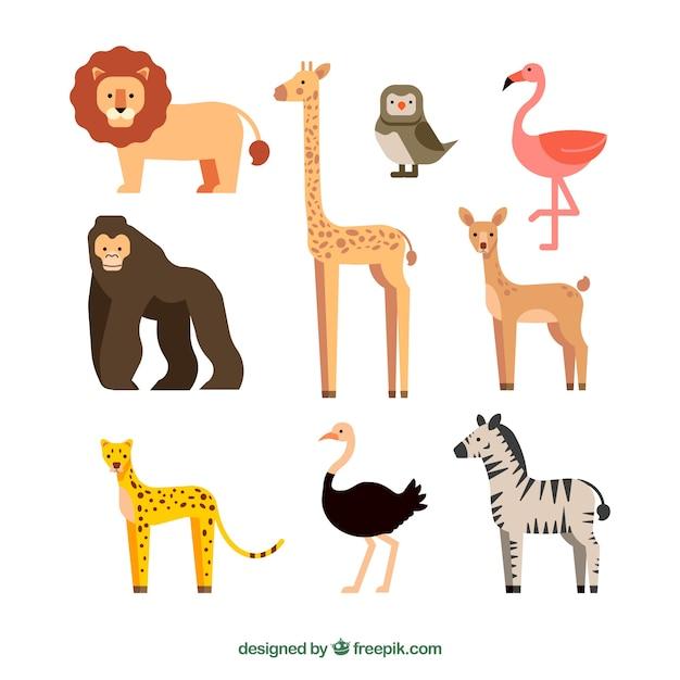 Raccolta di animali selvatici esotici Vettore gratuito