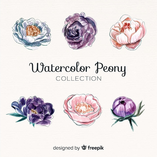 Raccolta di bellissimi fiori di peonia acquerello Vettore gratuito