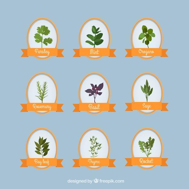 Raccolta di erbe aromatiche Vettore gratuito