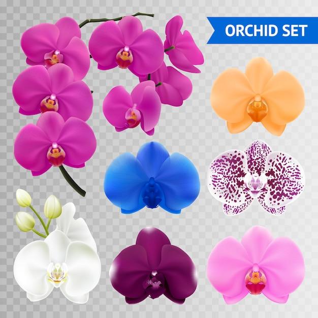 Raccolta di fiori colorati orchidea Vettore gratuito