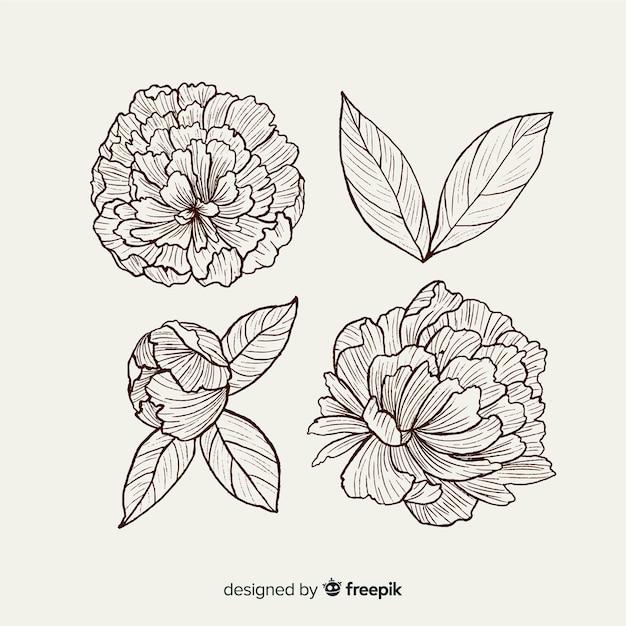 Raccolta di fiori di peonia disegnati a mano Vettore gratuito