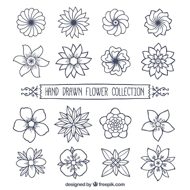 Raccolta di fiori disegnati a mano scaricare vettori gratis for Fiori disegnati