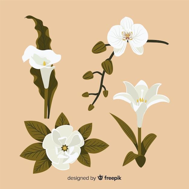 Raccolta di fiori e foglie botanici Vettore gratuito