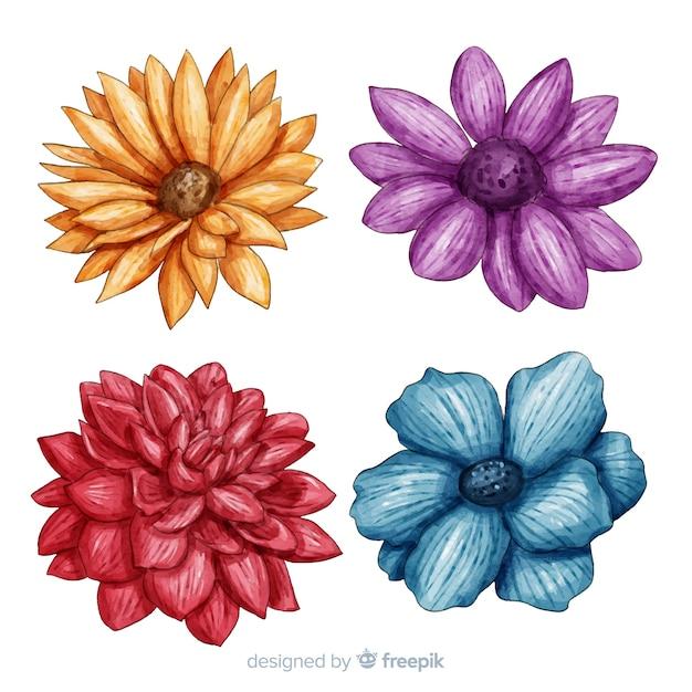 Raccolta di fiori e foglie colorate dell'acquerello Vettore gratuito